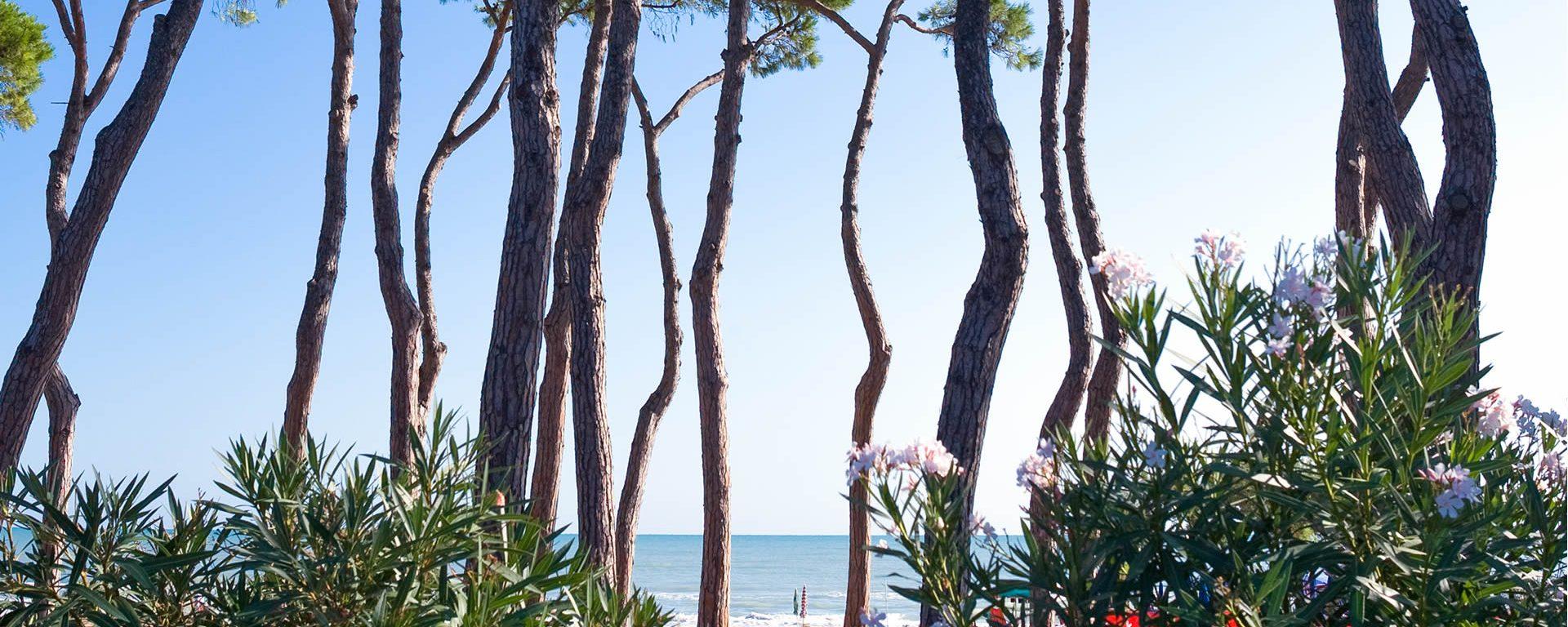 hotel-pineto-sul-mare